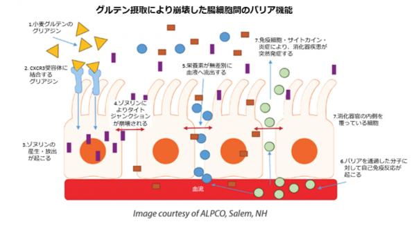 腸漏れ図2
