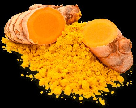 栄養Topics【クルクミンの抗がん効果を明らかにする研究】